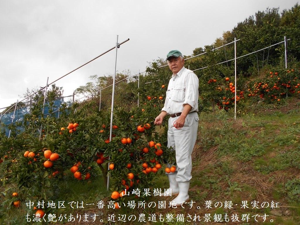 山崎果樹園の園主、山崎です。